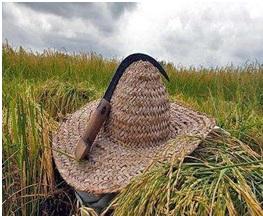 داس مخصوص برداشت برنج