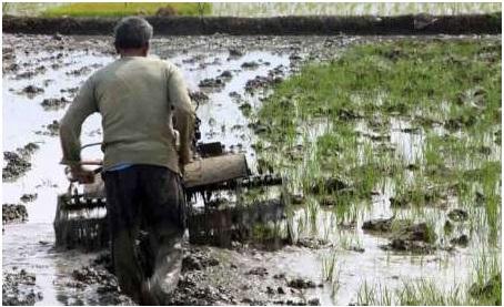 شخم زمستانه مزارع برنج