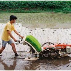 ابزار و دستگاه های مورد نیاز کاشت، داشت و برداشت برنج