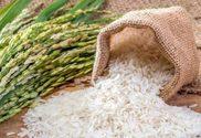 چرا فروشگاه اینترنتی برنج تالش؟